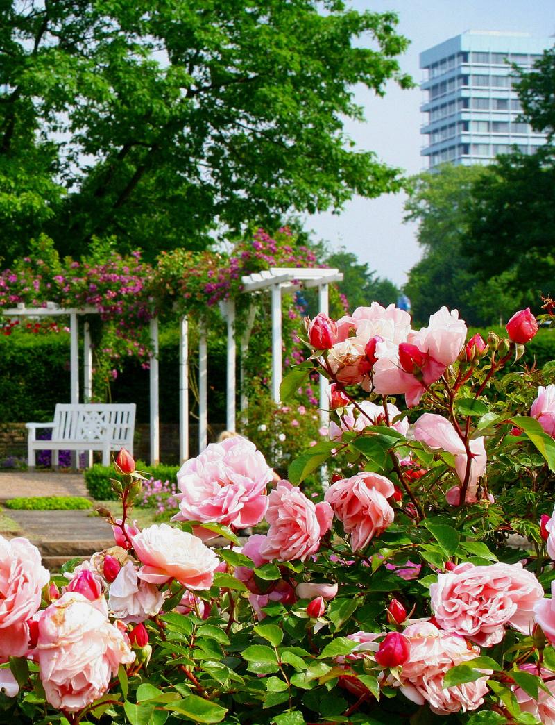 Führungen zur Rosenblüte im Westfalenpark