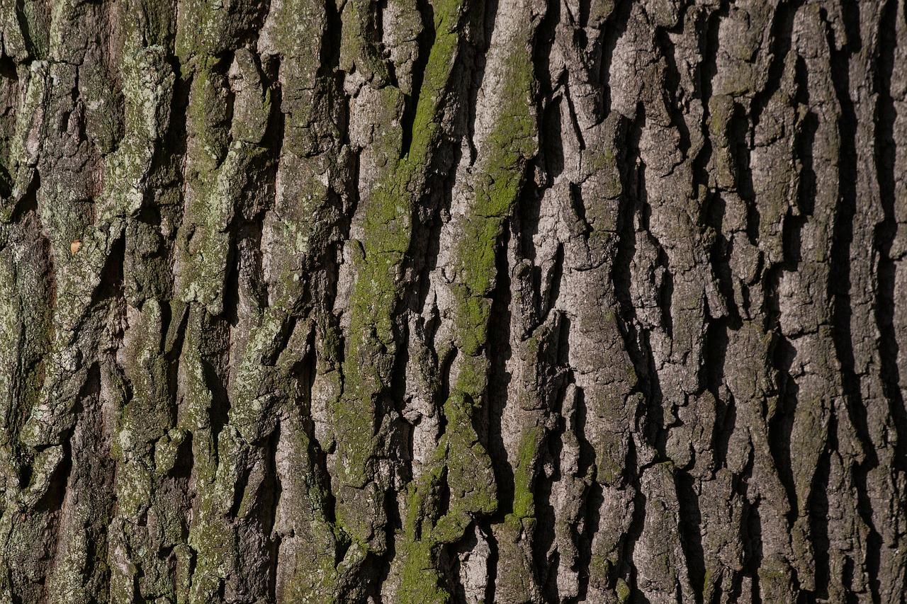 Im Stadtbezirk Innenstadt-Ost müssen Bäume gefällt werden