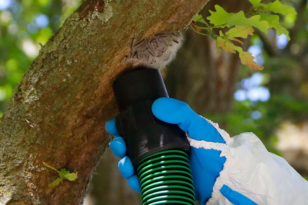 Nahaufnahme von der Absaugung eines Nestes (Foto: Gaye-Suse Kromer, Dortmund-Agentur)